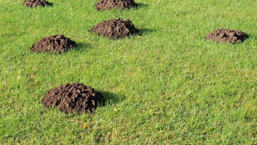 Mutimullahunnikud aias